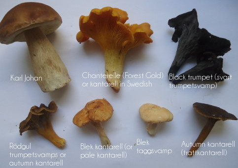 YLC guide: Mushroom Picking for Dummies | Your Living City